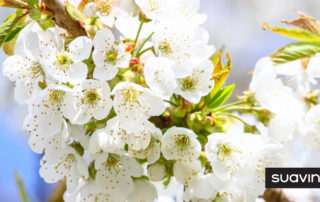 allergies printemps grossesse conseils blog grossesse suavinex