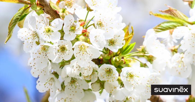 Allergies de printemps et grossesse