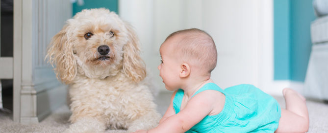 bebe-animal-conseils-blog-suavinex